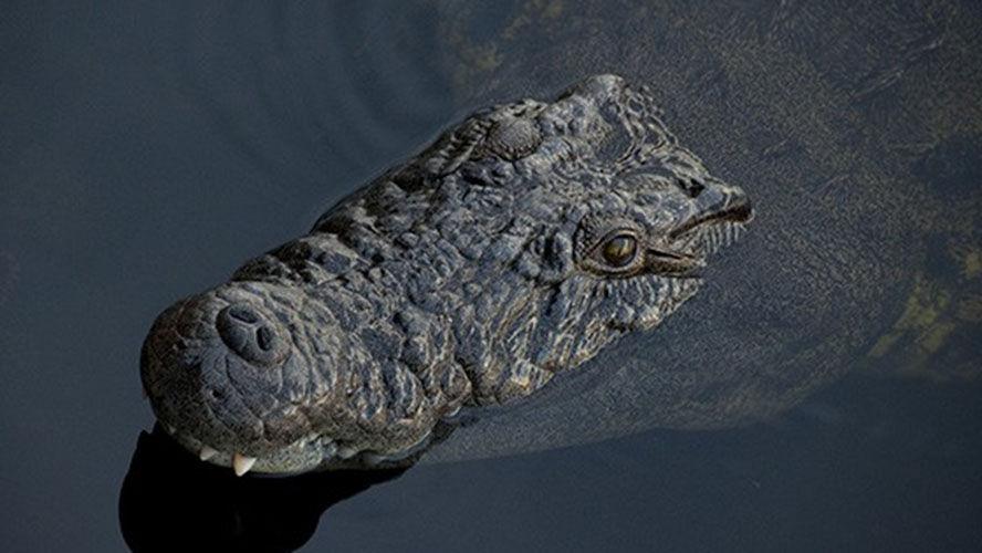 Menino de 10 anos é atacado e devorado por crocodilo na frente dos irmãos