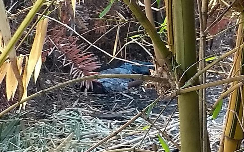 Corpo é desovado em área de bambuzal em Marabá