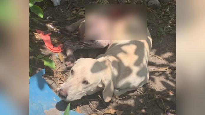 Homem retalha cachorro a golpes de facão em Marabá