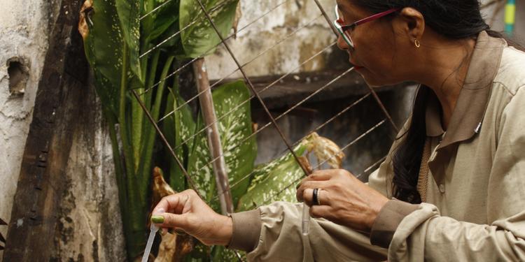 Casos de dengue sobem 33% no Pará