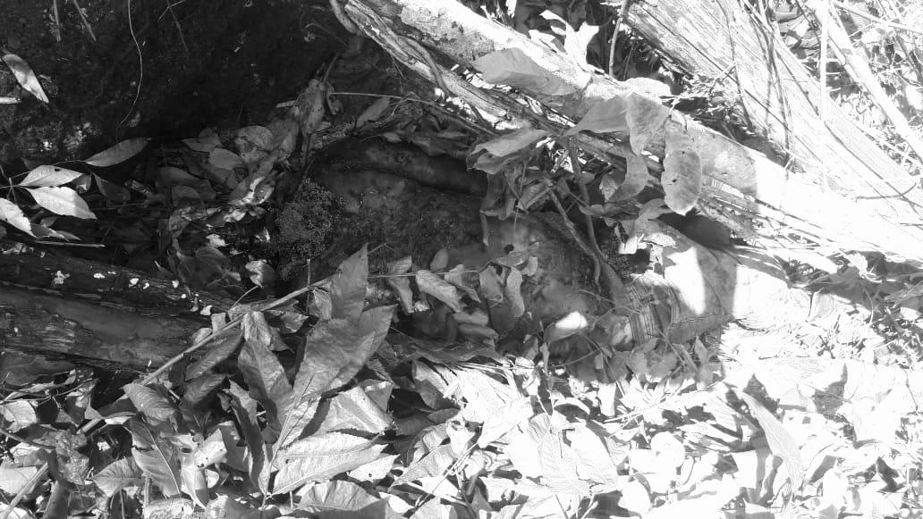 Corpo sem a cabeça e em decomposição é encontrado em Canaã dos Carajás