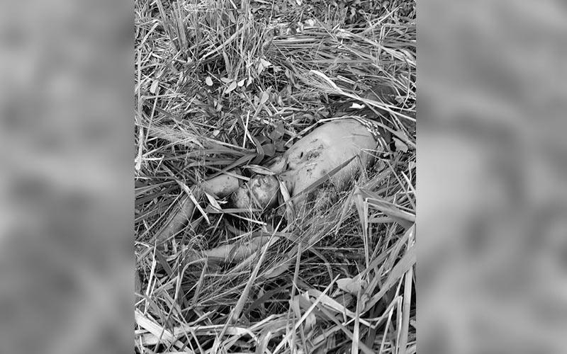 Parauapebas: cadáver encontrado trucidado por facadas em área de mata