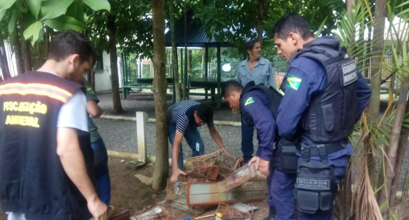Pássaros mantidos em cativeiro são libertados pela Semma em Marabá