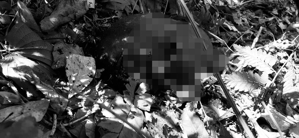 Cabeça de cadáver é encontrada por colonos em Canaã